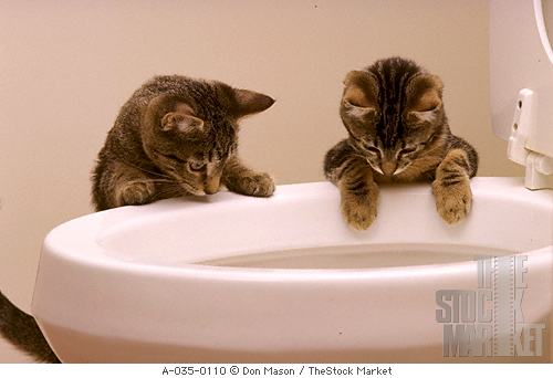 toilet cats.jpg